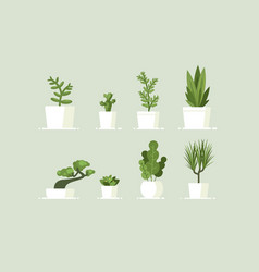 houseplant in pots vector image vector image