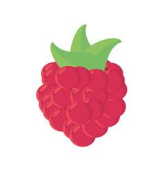raspberry fruit food healthy vector image