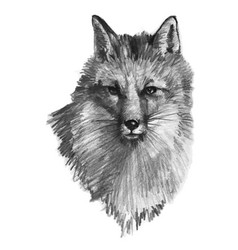 hand drawn fox vector image