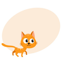 cute and funny red cat character curious playful vector image