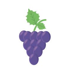 Grape fruit food healthy vector