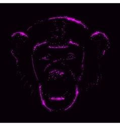 Monkey silhouette of purple lights vector
