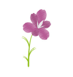 Drawing amaryllis flower decoration beautiful vector