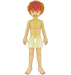 Little boy and nervous system vector image vector image