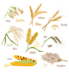 Cereal plants icons  oats vector