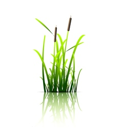 Grass green reed vector