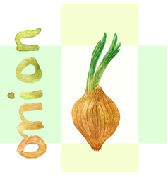 Watercolor onion onion hand drawn watercolor vector