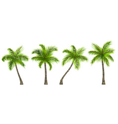 Set realistic palm trees isolated on white vector