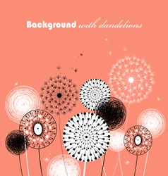 Beautiful dandelions vector image