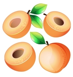Composition of Apricot on white background vector image vector image