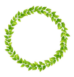Wreath of fresh green leaves vector