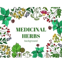 Wild medicinal herbs background vector