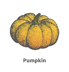 hand-drawn ripe yellow pumpkin vector image