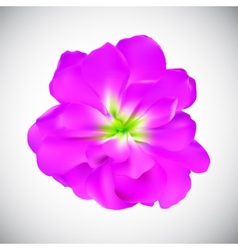 Realistic flower high quality vector