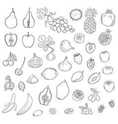 set of stylized fresh cute fruits vector image