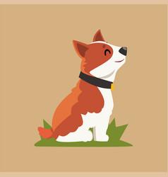 Cartoon welsh corgi dog sitting on green grass vector