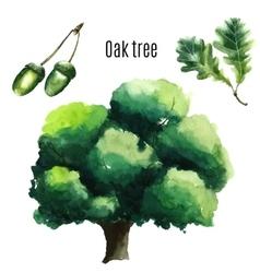 Oak tree watercolor vector