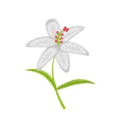 Drawing crocus flower petal leaf vector