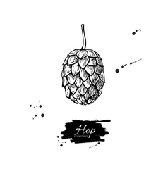 Hop plant drawing Hand drawn vector image