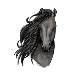 Black mare horse head sketch vector