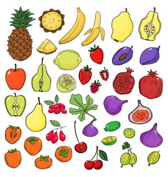 set of stylized sketch fresh cute fruits vector image vector image