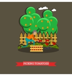 Picking tomatoes concept in vector