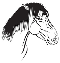 horse head profile vector image