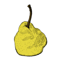 colorful engraving of a pear vector image vector image