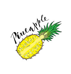 the cut fruit of pineapple on a white background vector image vector image