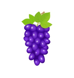 Black grapes vector