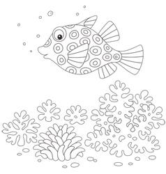 Boxfish vector