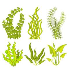 Underwater seaweed elements vector