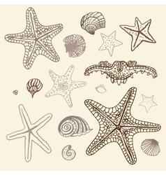 Sea Starfish set Hand drawn vector image