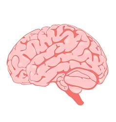 pink brain side view vector image vector image