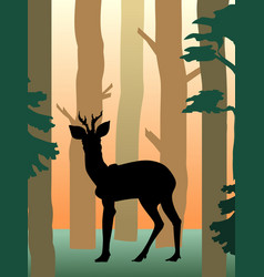 roedeer in the forest vector image