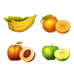 fresh fruits slice realistic juicy healthy vector image