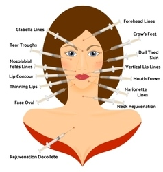 Hyaluronic Asid Infographic Face Plastic Surgery vector image