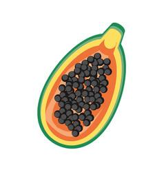 isolated papaya fruit vector image