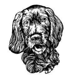 dog spaniel pet hand drawn vector image vector image