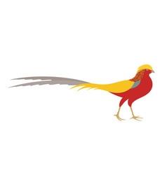 Pheasant golden pheasant vector