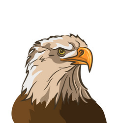 eagle isolated on white background vector image