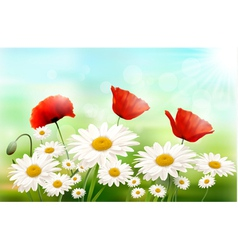 Nature background with summer flowers vector image