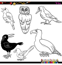 Birds cartoon coloring page vector