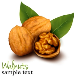 Walnuts and a cracked walnut vector