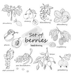 Set of garden berries vector image