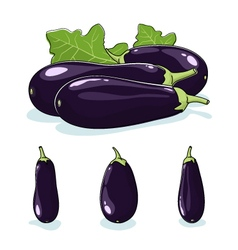 Vegetable eggplant edible fruit vector