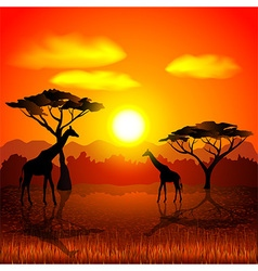 Sunset in african savannah background vector