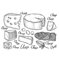 cheese variations cuisine sketch vector image
