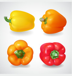 pepper bell vegetable realistic icon set vector image