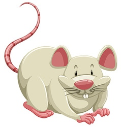 White mouse vector